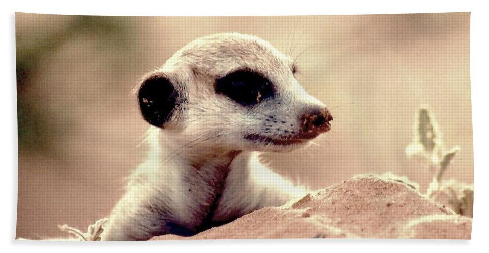 Meerkat Hand Towel featuring the photograph Where Did Everyone Go by Kenneth Imler