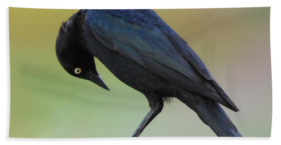 Black Bird Hand Towel featuring the photograph Where Did It Go by Donna Blackhall