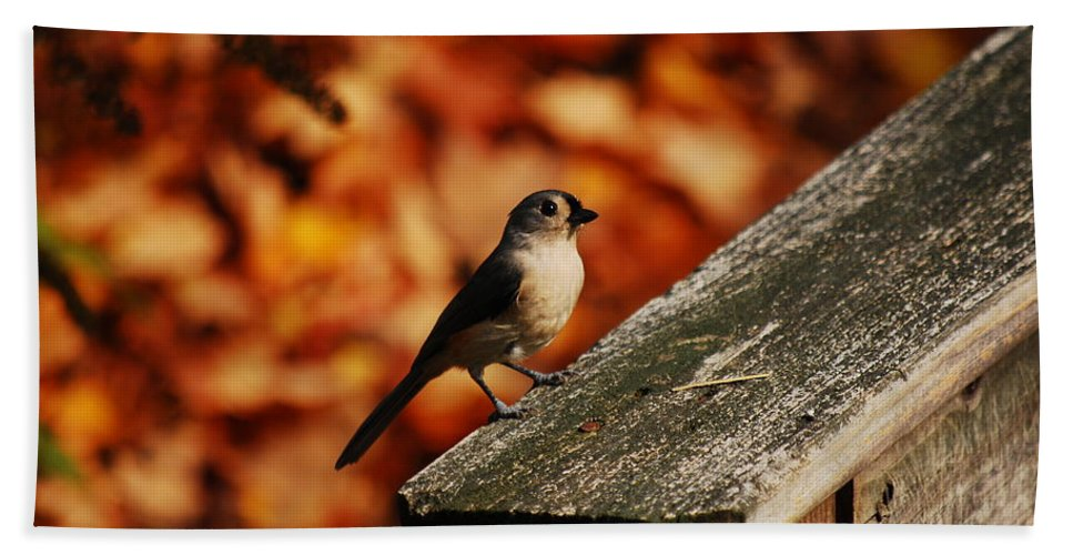 Titmouse Hand Towel featuring the photograph Where Should I Go by Lori Tambakis