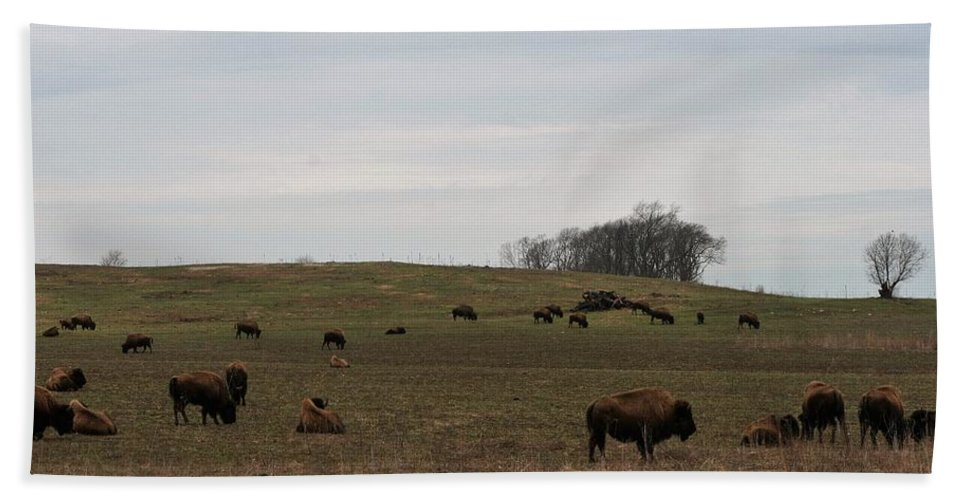 Bison Hand Towel featuring the photograph Where The Buffalo Roam 2 by Lew Wescott