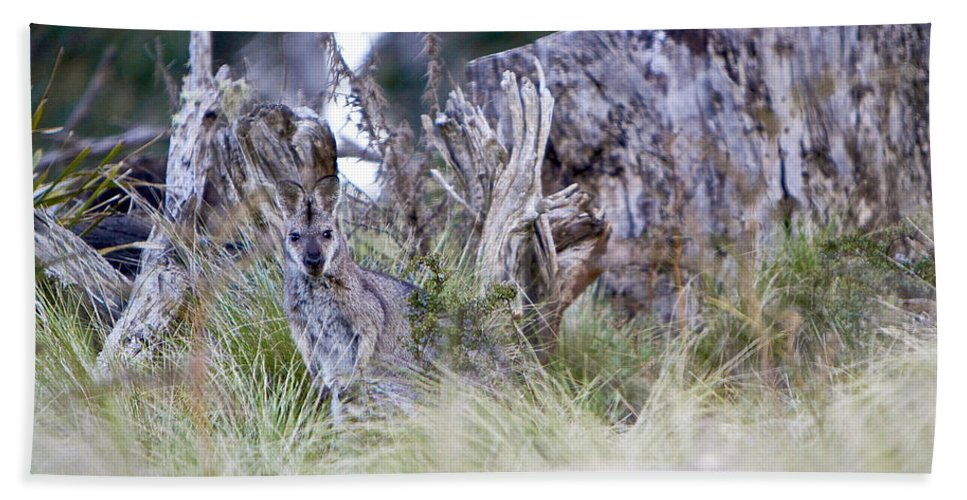 Kangaroo Hand Towel featuring the photograph Where's The Roo by Michelle Ngaire