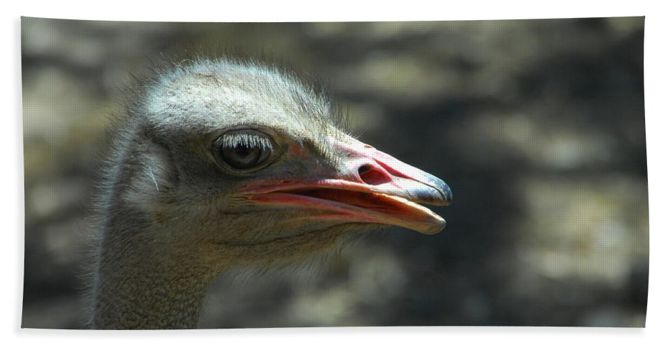 Ostrich Bath Sheet featuring the photograph Where's The Sand by Donna Blackhall