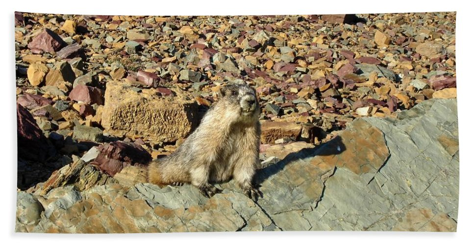Marmota Caligata Hand Towel featuring the photograph Whistle Pig Of The Rockies by Two Small Potatoes