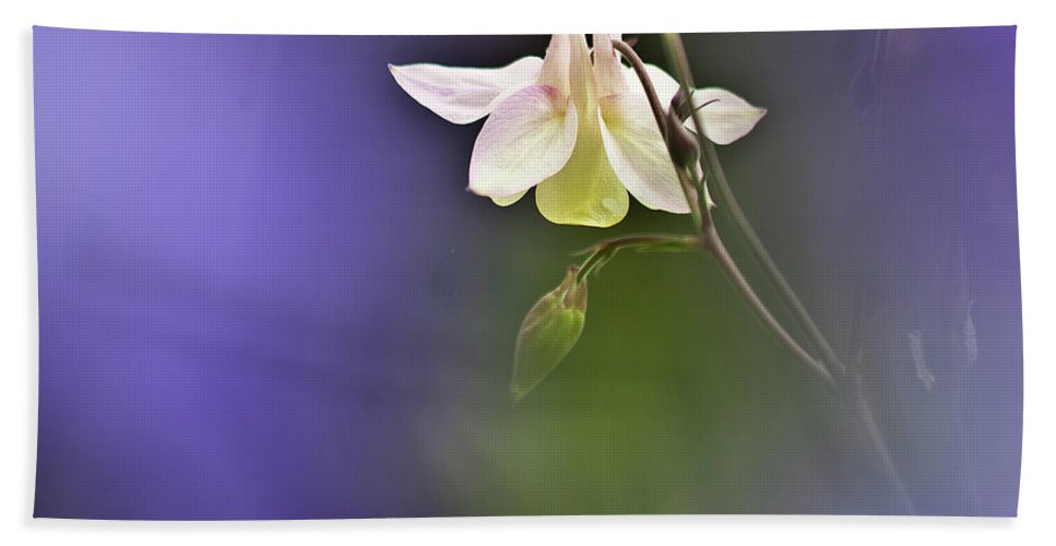Aquilegia Hand Towel featuring the photograph White Aquilegia by Heiko Koehrer-Wagner