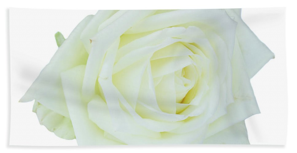 Rose Hand Towel featuring the photograph White Rose by Anastasy Yarmolovich