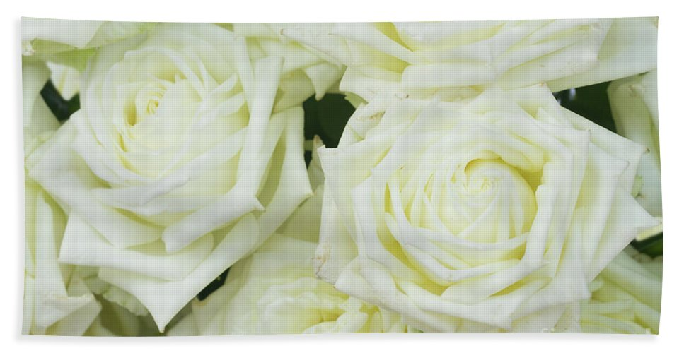 Rose Hand Towel featuring the photograph White Blooming Roses by Anastasy Yarmolovich