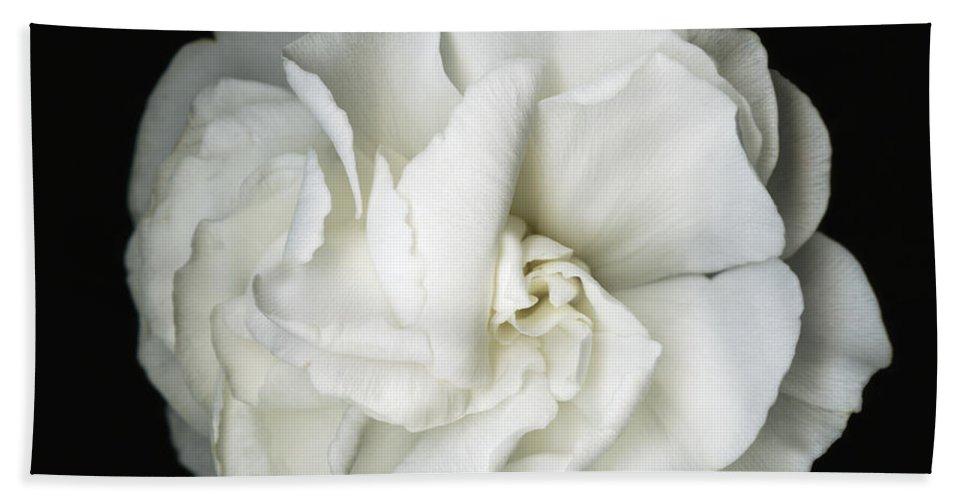 Flower Hand Towel featuring the photograph White Blossom by Susanna Shaposhnikova