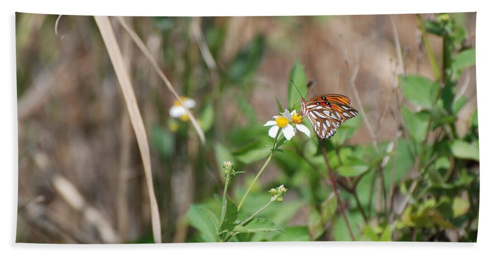 Butterfly Hand Towel featuring the photograph White Butterfly by Rob Hans
