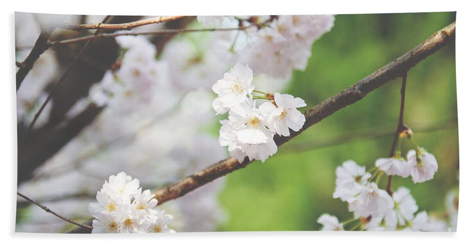 Cherry Blossom Hand Towel featuring the photograph White Cherry Blossoms by Ivy Ho