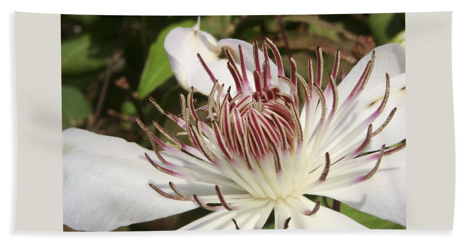 Clematis Bath Towel featuring the photograph White Clematis Henryi by Margie Wildblood