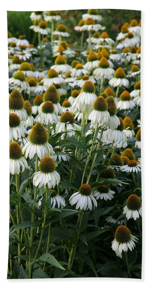 White Coneflower Bath Sheet featuring the photograph White Coneflower Field by Christiane Schulze Art And Photography