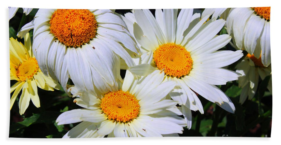 White Daisy Hand Towel featuring the painting White Daisy Flowers by Corey Ford