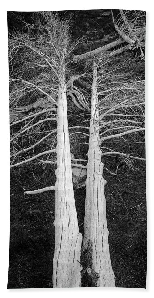 Dead Trees Bath Sheet featuring the photograph White Dead Trees by Crystal Wightman
