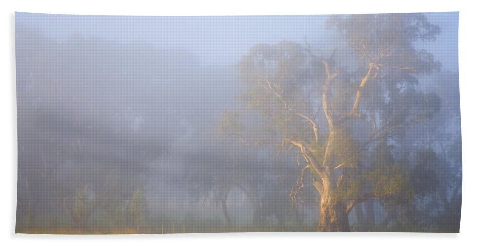Tree Bath Sheet featuring the photograph White Gum Morning by Mike Dawson