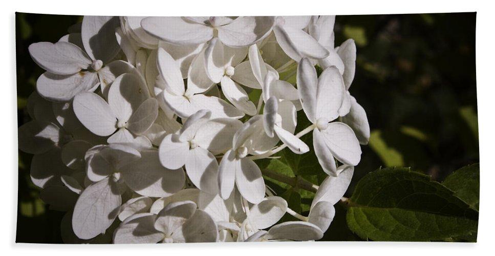 Hydrangea Bath Towel featuring the photograph White Hydrangea Bloom by Teresa Mucha