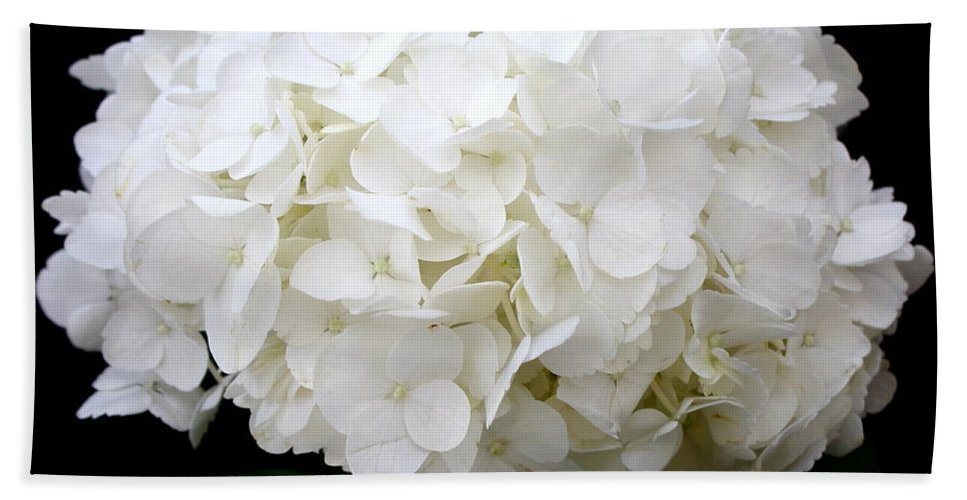 White Hand Towel featuring the photograph White Hydrangea by Kume Bryant