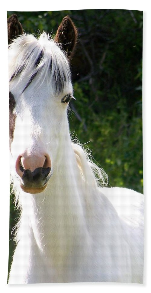Curious Bath Sheet featuring the photograph White Indian Pony by Greg Hammond