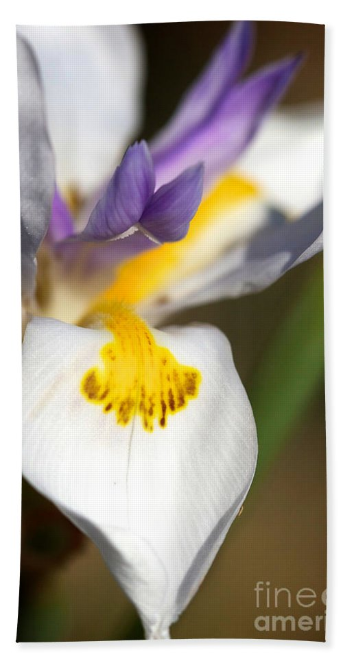 White Iris Bath Sheet featuring the photograph White Iris One by Brooke Roby