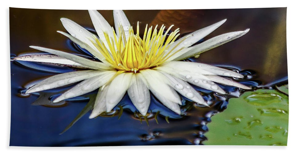 Lily Bath Sheet featuring the photograph White Lily On Pond by Les Greenwood