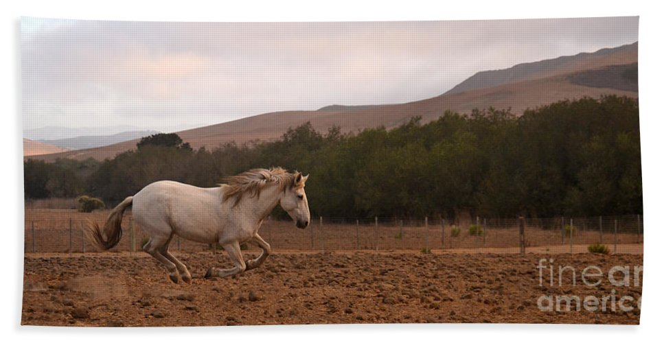 Rtf Ranch Hand Towel featuring the photograph White Mare Gallops #1 - Panoramic Brighter by Heather Kirk