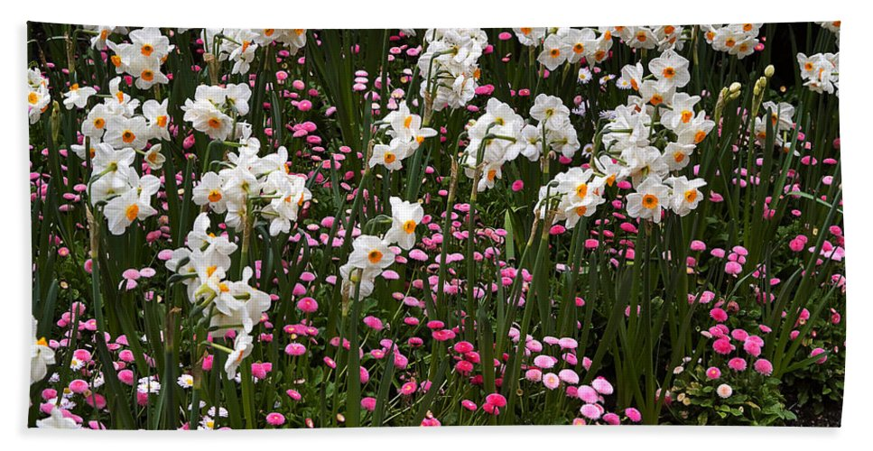 Flower Hand Towel featuring the photograph White Narcissus With Pink English Daisies In A Spring Garden by Louise Heusinkveld