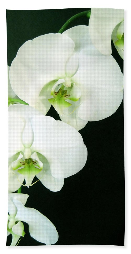 Flora Bath Sheet featuring the photograph White Orchid Elegance by Cheryl Ehlers
