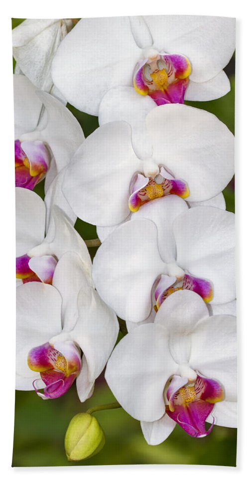 Flower Hand Towel featuring the photograph White Orchids by Bob Slitzan