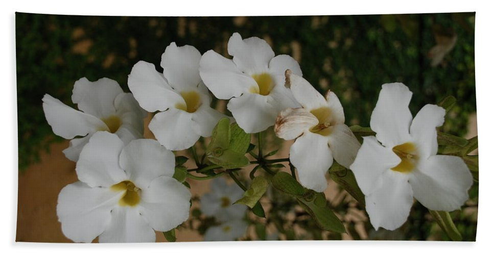 Macro Hand Towel featuring the photograph White Orchids by Rob Hans
