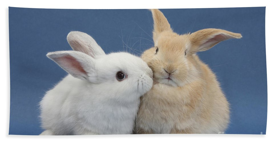 Nature Hand Towel featuring the photograph White Rabbit And Sandy Rabbit by Mark Taylor