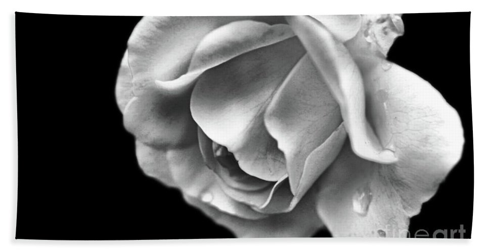 Rose Bath Sheet featuring the photograph White Rose Aglow by Smilin Eyes Treasures