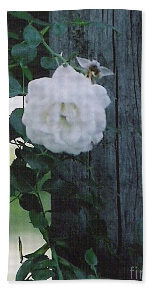 Roses Bath Sheet featuring the photograph White Rose by Charles Robinson