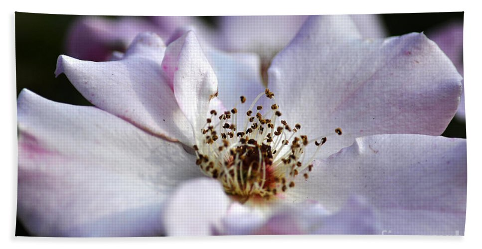 Clay Hand Towel featuring the photograph White Rose by Clayton Bruster