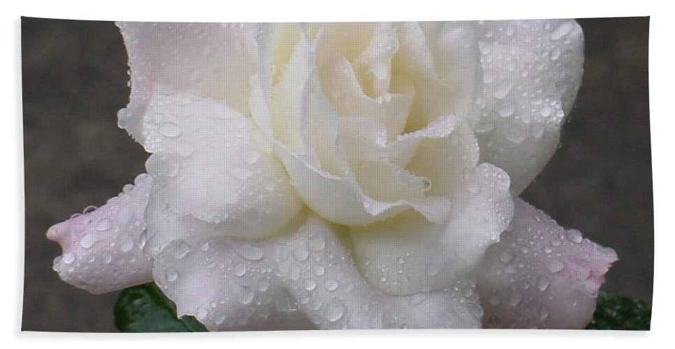 White Hand Towel featuring the photograph White Rose In Rain - 3 by Shirley Heyn