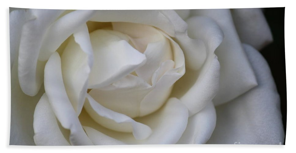 White Bath Sheet featuring the photograph White Rose2 by Carol Turner