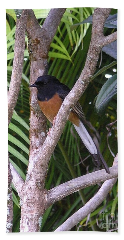 Black Birds Hand Towel featuring the photograph White Rumped Shama by Mary Deal