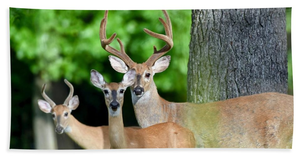 Wilderness Bath Sheet featuring the photograph White-tailed Deer Family by Jeramey Lende
