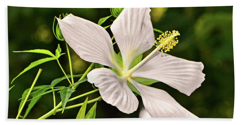 Hibiscus Bath Sheet featuring the photograph White Texas Star Hibiscus 003 by George Bostian