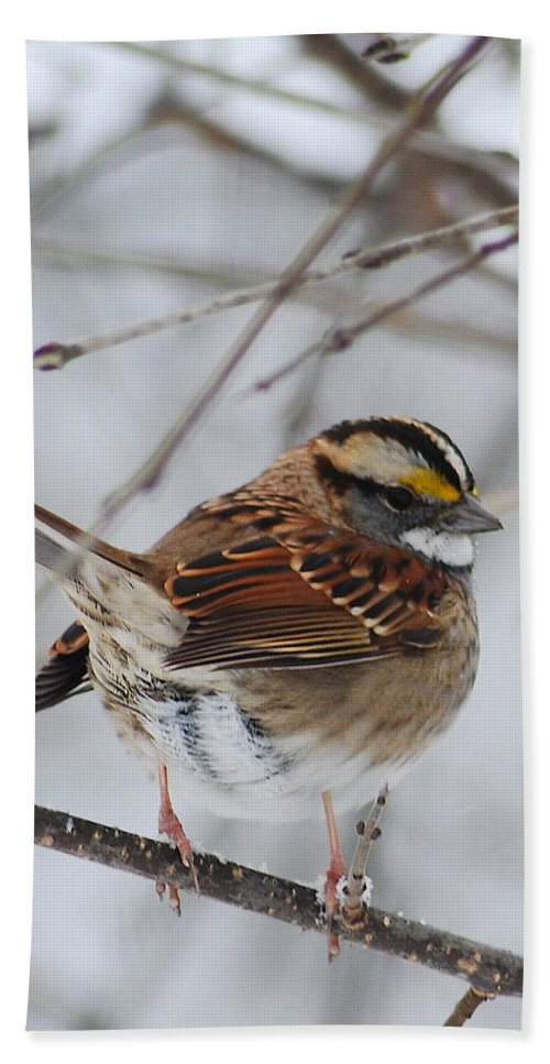 White-throated Sparrow Hand Towel featuring the photograph White Throated Sparrow 2 by Michael Peychich