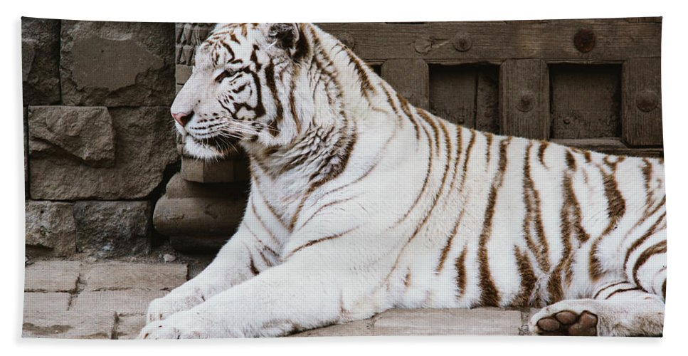 Majestic Bath Sheet featuring the photograph White Tiger by Pati Photography