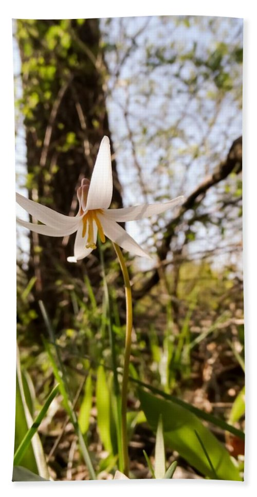 White Trout Lily Bath Sheet featuring the photograph White Trout Lily by Cynthia Woods