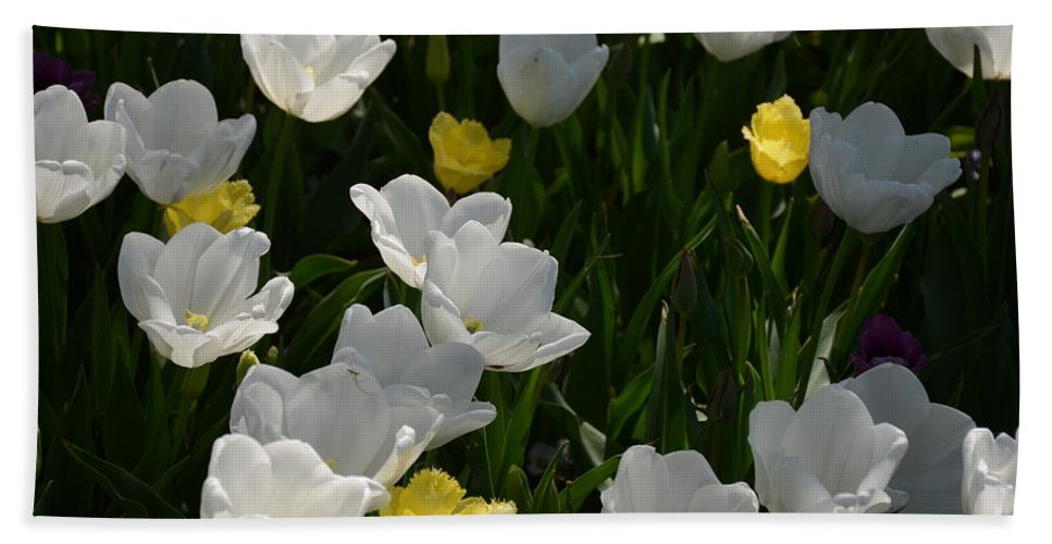 White Tulips Hand Towel featuring the painting Happy Day by Constance Woods