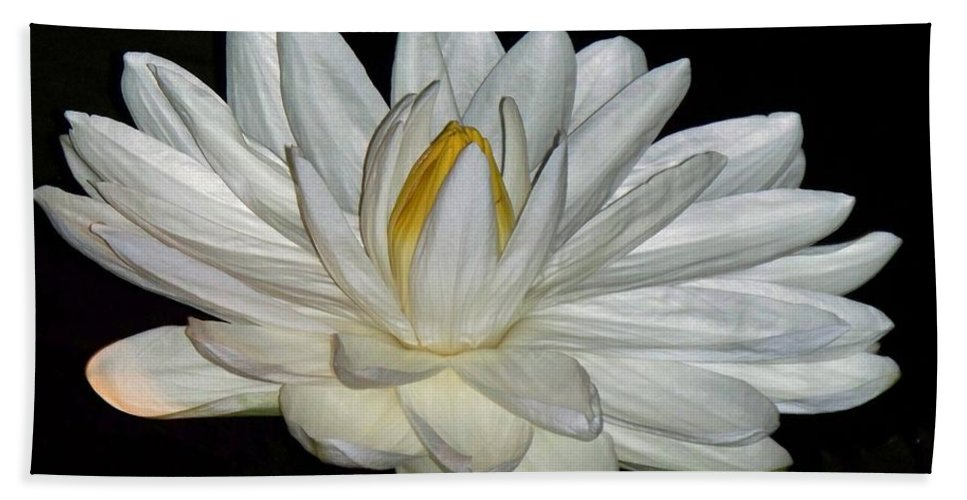 White Bath Sheet featuring the painting White Water Lily by Eric Schiabor
