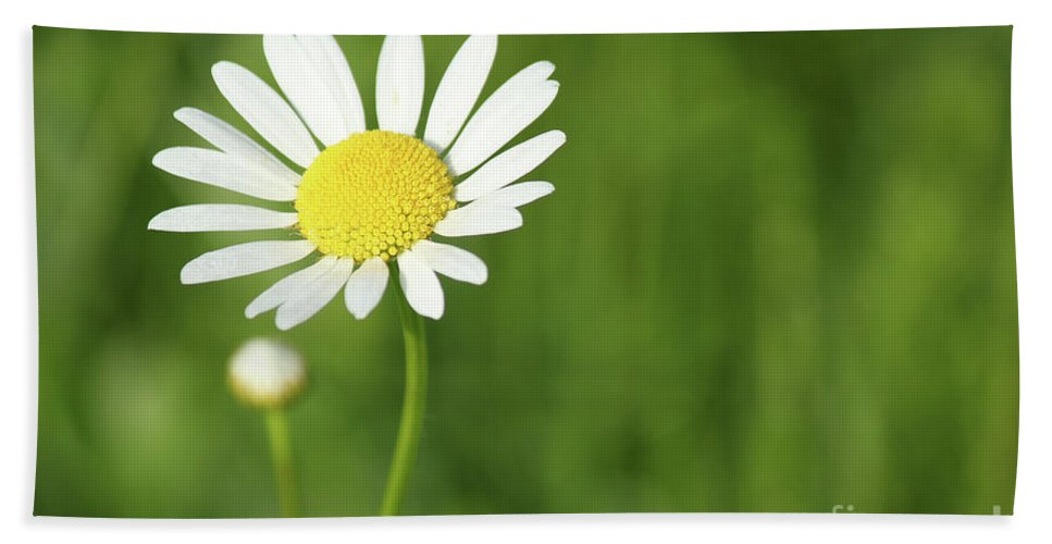 Camomile Hand Towel featuring the photograph White Wild Flower Spring Scene by Goce Risteski