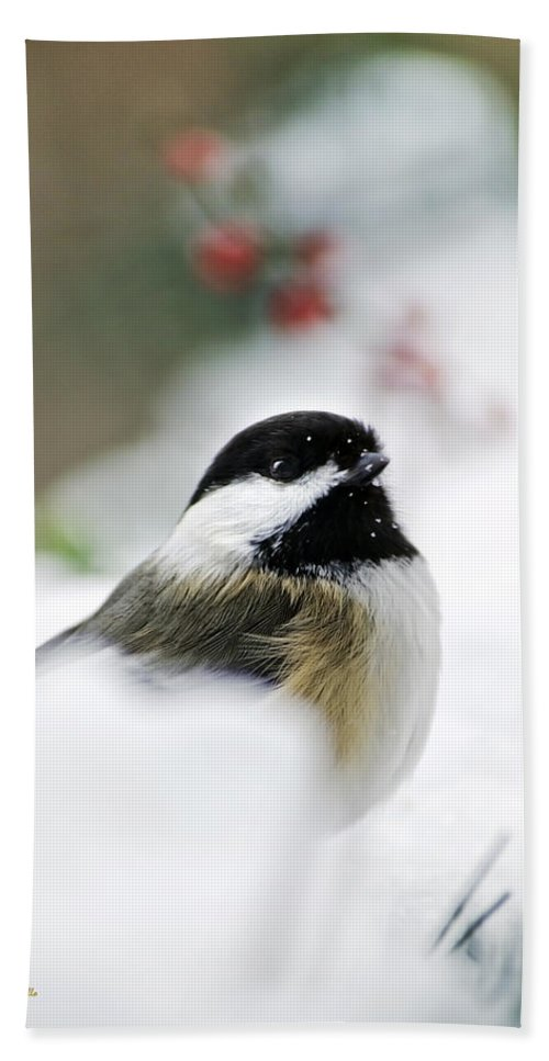 Bird Hand Towel featuring the photograph White Winter Chickadee by Christina Rollo