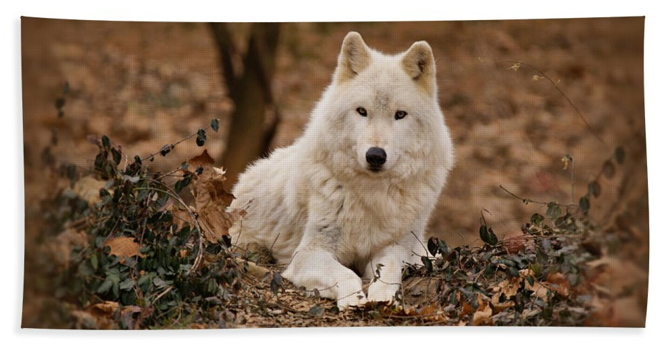 Wolf Bath Sheet featuring the photograph White Wolf by Sandy Keeton