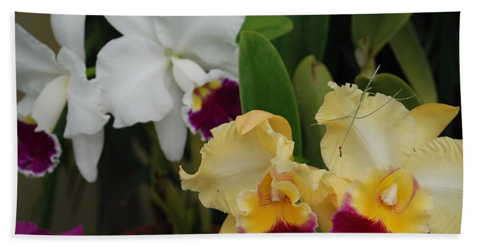 Macro Hand Towel featuring the photograph White Yellow Orchids by Rob Hans