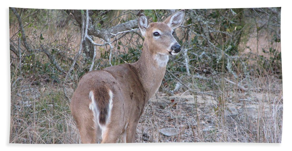 Deer Hand Towel featuring the photograph Whitetail Deer II by Stacey May