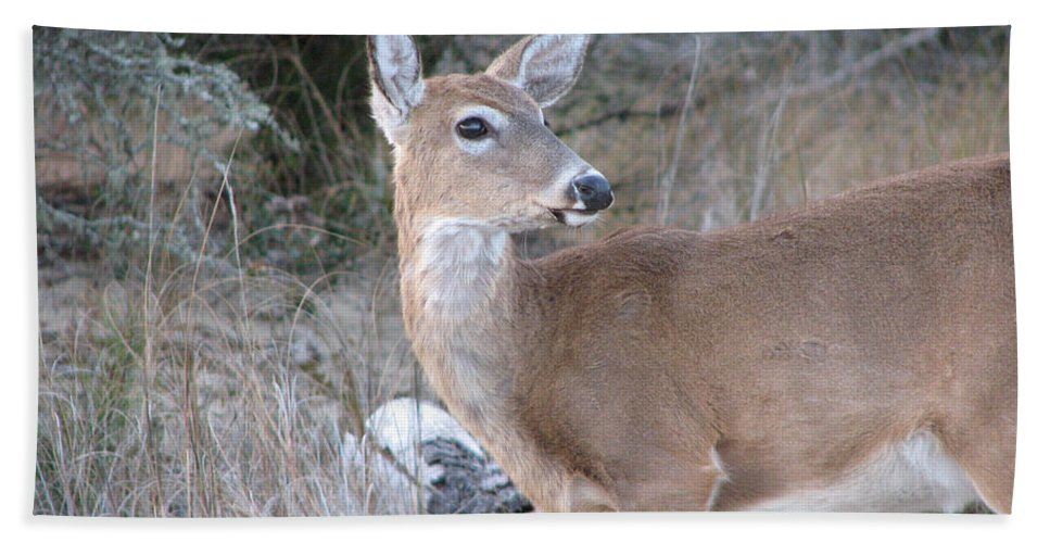 Deer Hand Towel featuring the photograph Whitetail Deer by Stacey May