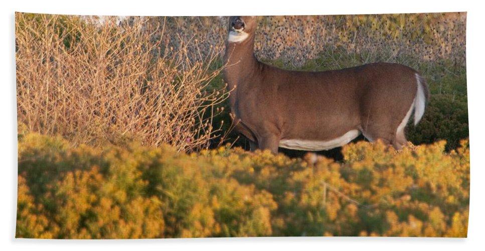 Deer Bath Sheet featuring the photograph Whitetail Doe by Steven Natanson