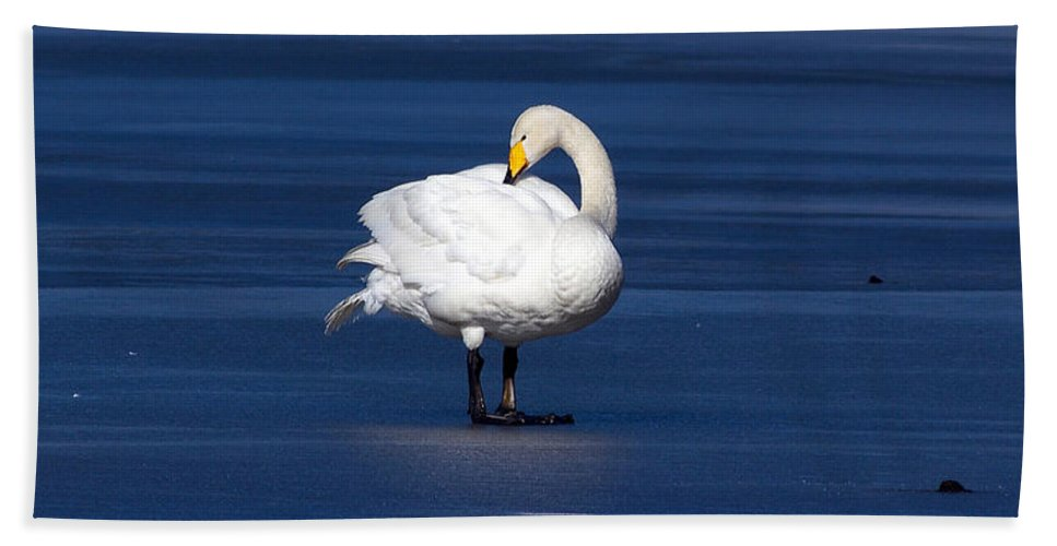 Lehtokukka Hand Towel featuring the photograph Whooper Swan 2 by Jouko Lehto